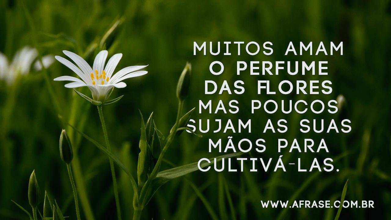 Imagens E Frases: O Perfume Das Flores