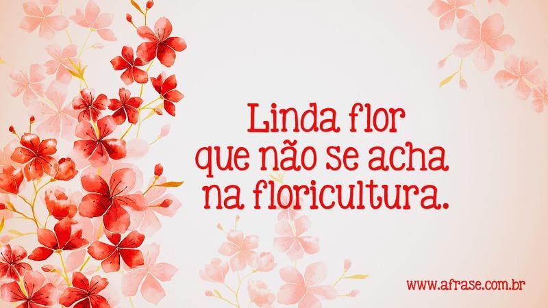 A Frase Linda Flor